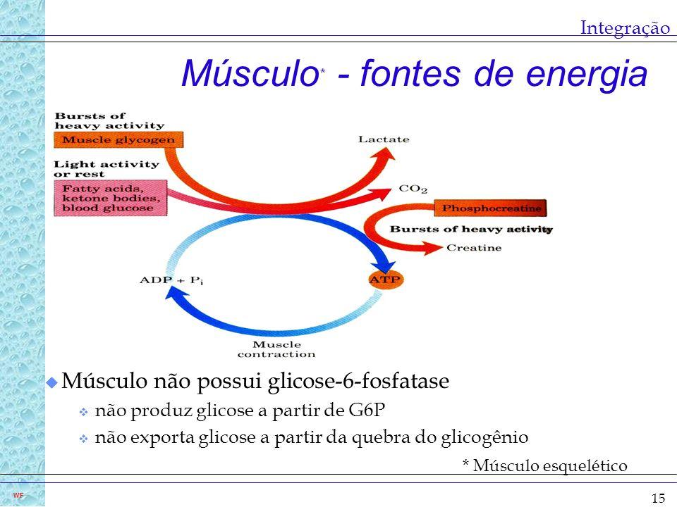 Músculo* - fontes de energia