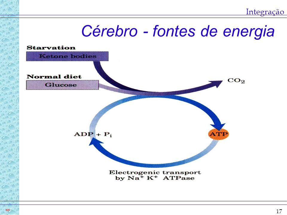 Cérebro - fontes de energia