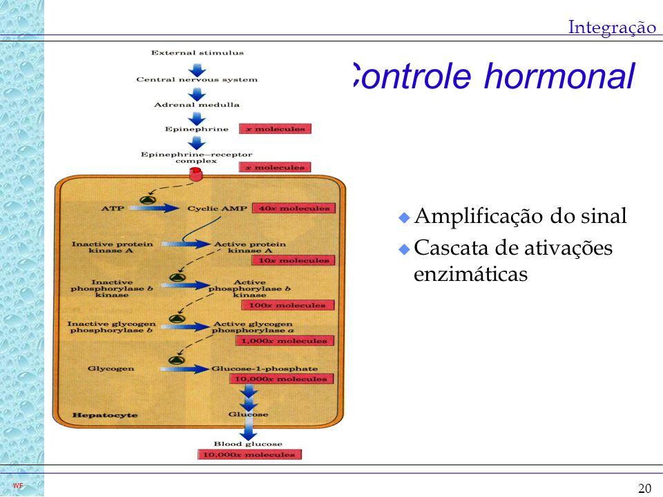 Controle hormonal Amplificação do sinal