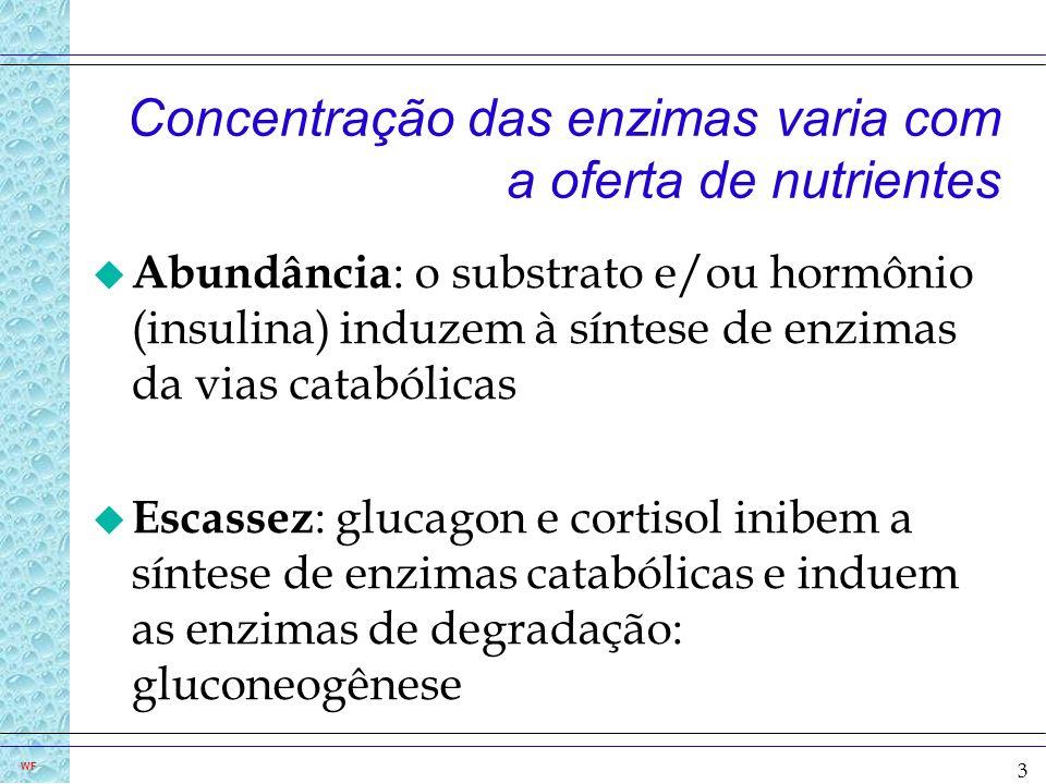 Concentração das enzimas varia com a oferta de nutrientes