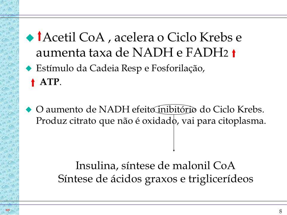 Acetil CoA , acelera o Ciclo Krebs e aumenta taxa de NADH e FADH2