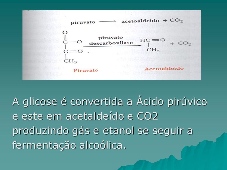A glicose é convertida a Ácido pirúvico
