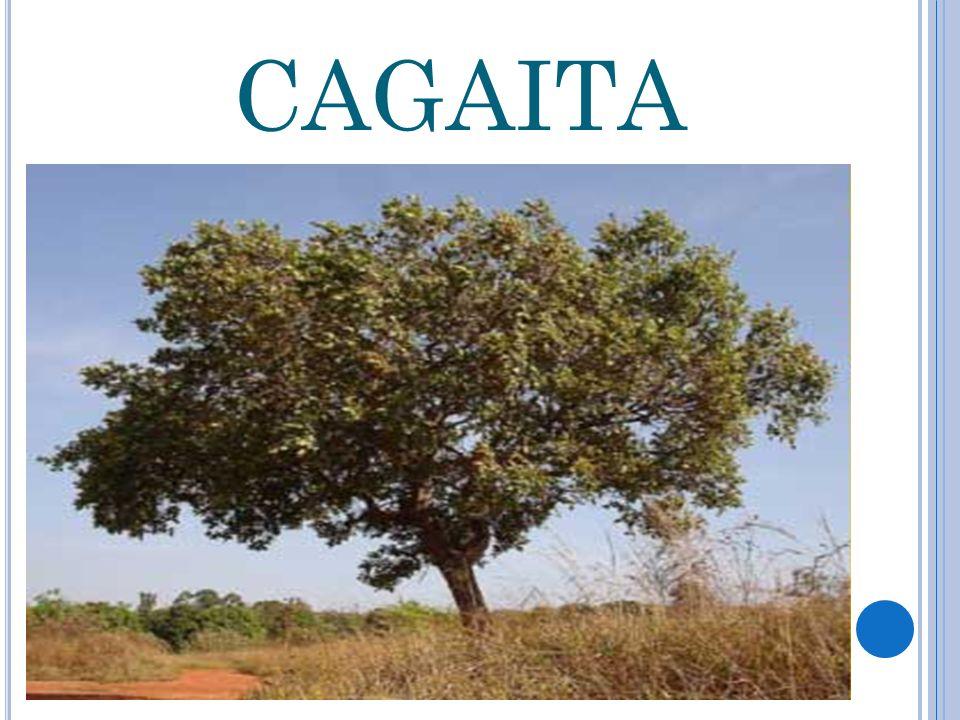CAGAITA