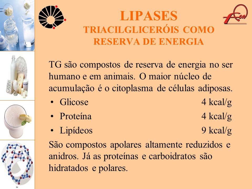 LIPASES TRIACILGLICERÓIS COMO RESERVA DE ENERGIA