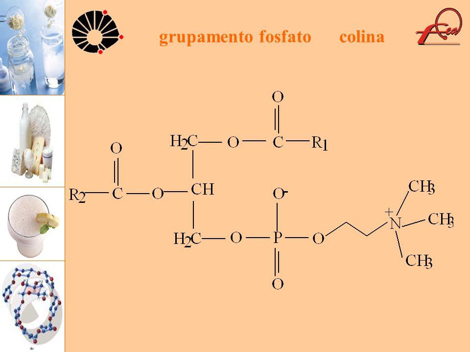 grupamento fosfato colina
