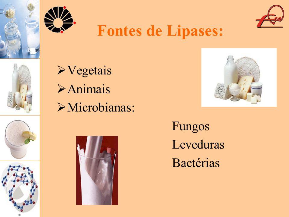 Fontes de Lipases: Vegetais Animais Microbianas: Fungos Leveduras