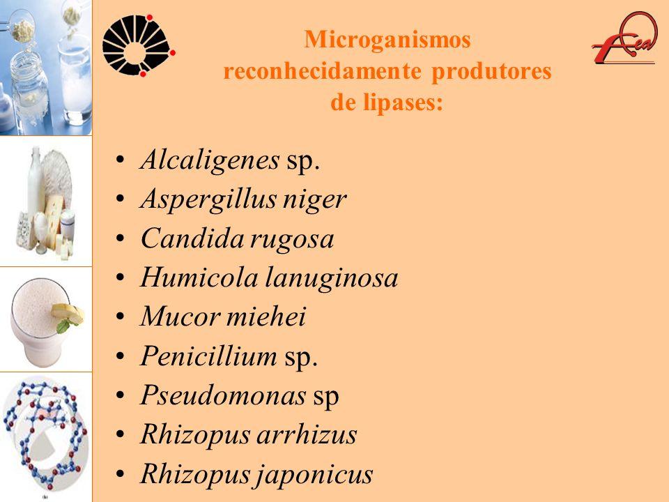 Microganismos reconhecidamente produtores de lipases: