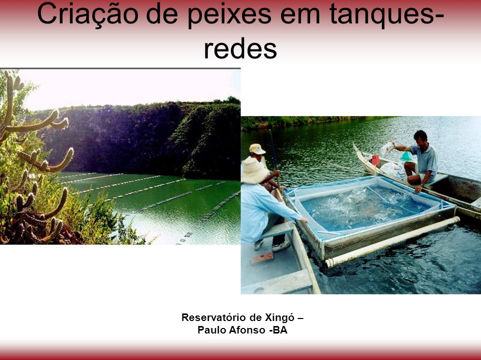 Criação de peixes em tanques-redes