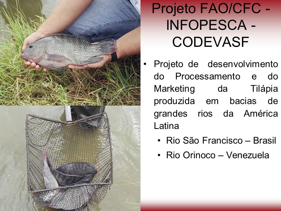 Projeto FAO/CFC - INFOPESCA - CODEVASF