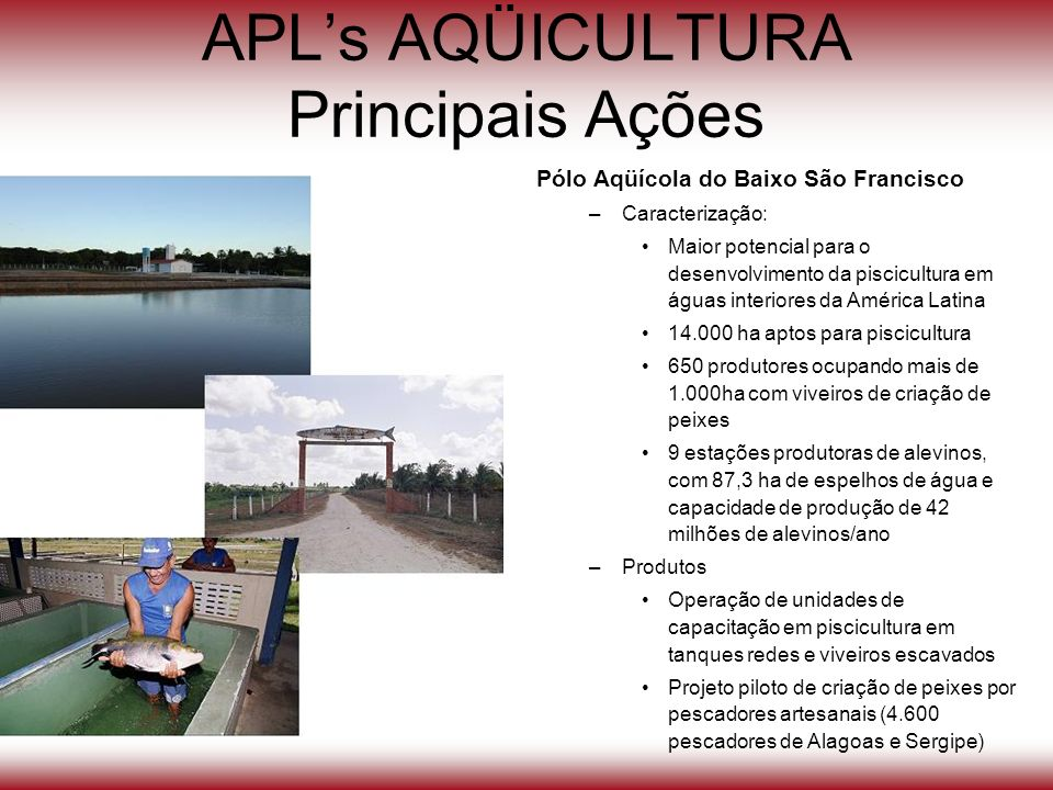 APL's AQÜICULTURA Principais Ações
