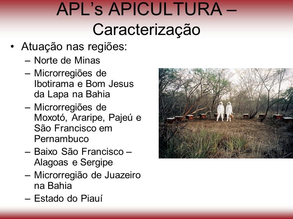 APL's APICULTURA – Caracterização