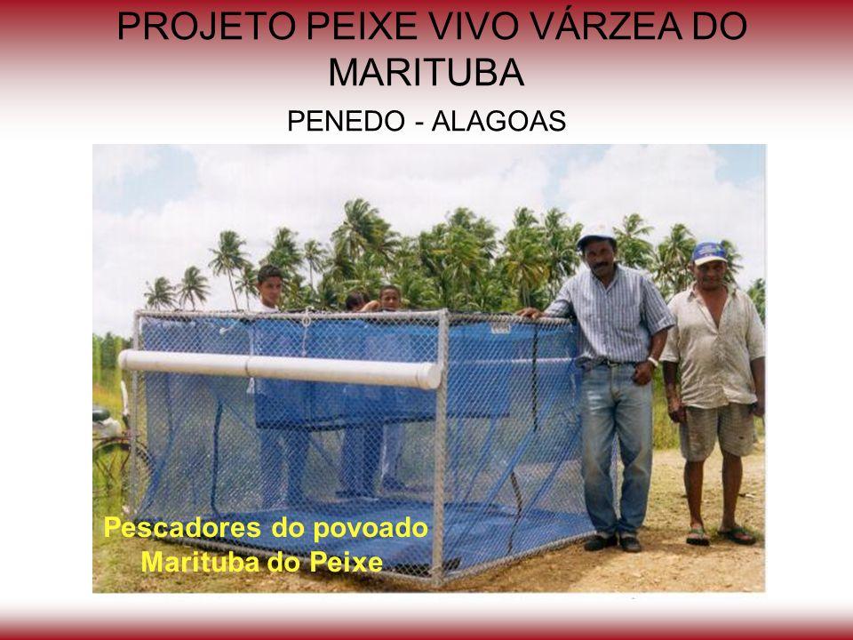 PROJETO PEIXE VIVO VÁRZEA DO MARITUBA PENEDO - ALAGOAS