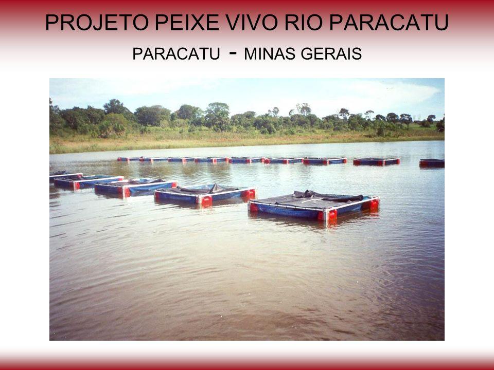 PROJETO PEIXE VIVO RIO PARACATU PARACATU - MINAS GERAIS