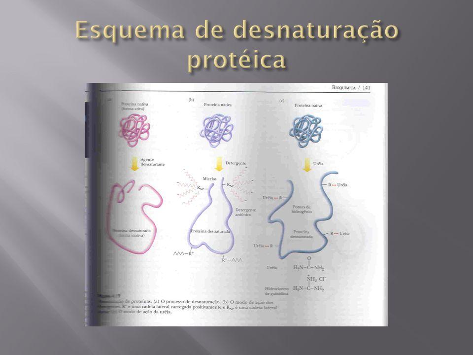 Esquema de desnaturação protéica