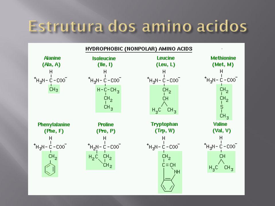 Estrutura dos amino acidos