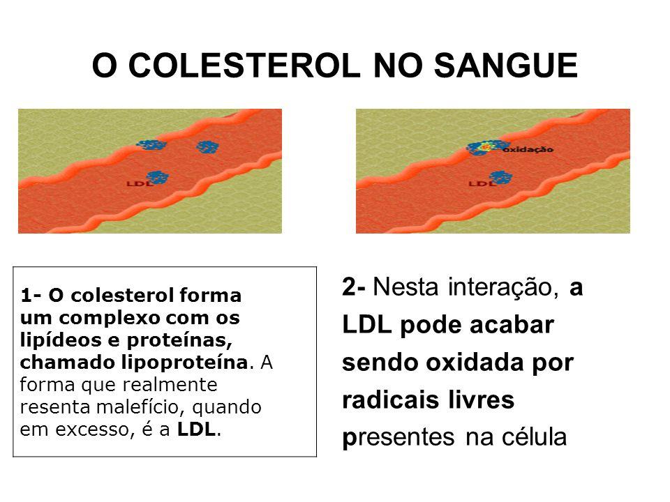O COLESTEROL NO SANGUE 2- Nesta interação, a LDL pode acabar