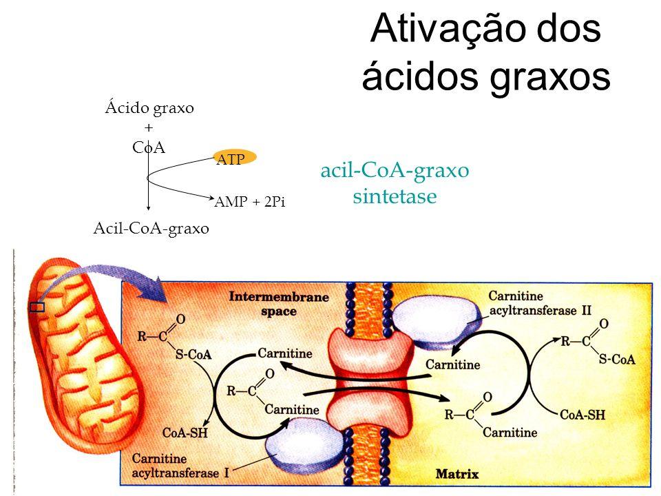 Ativação dos ácidos graxos