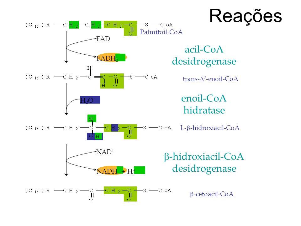 Reações acil-CoA desidrogenase enoil-CoA hidratase b-hidroxiacil-CoA