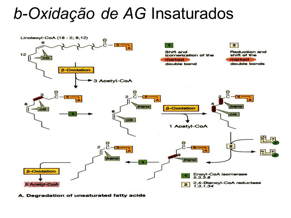 b-Oxidação de AG Insaturados