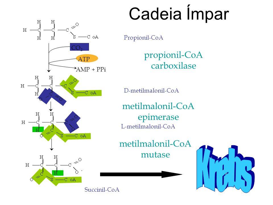 Cadeia Ímpar Krebs propionil-CoA carboxilase metilmalonil-CoA
