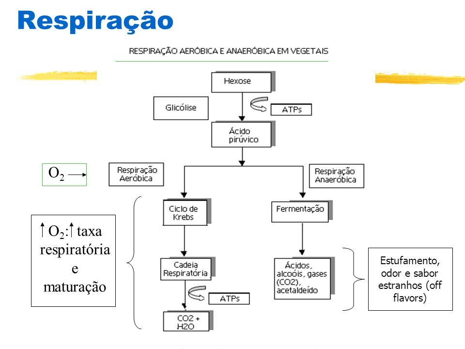 Respiração O2 O2: taxa respiratória e maturação