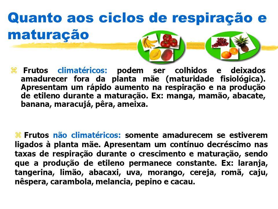 Quanto aos ciclos de respiração e maturação
