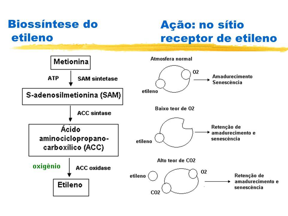 Biossíntese do etileno
