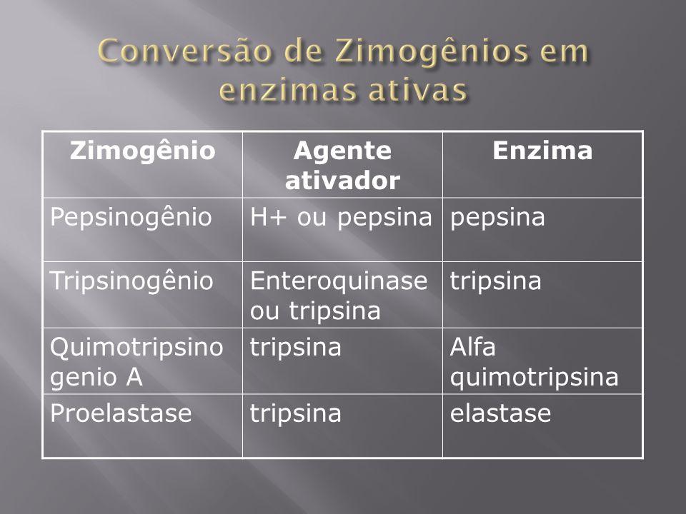 Conversão de Zimogênios em enzimas ativas