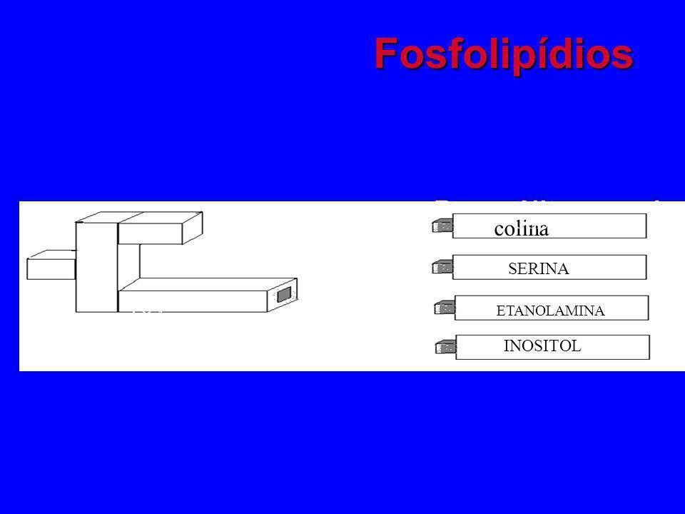 Fosfolipídios Bases Nitrogenadas: