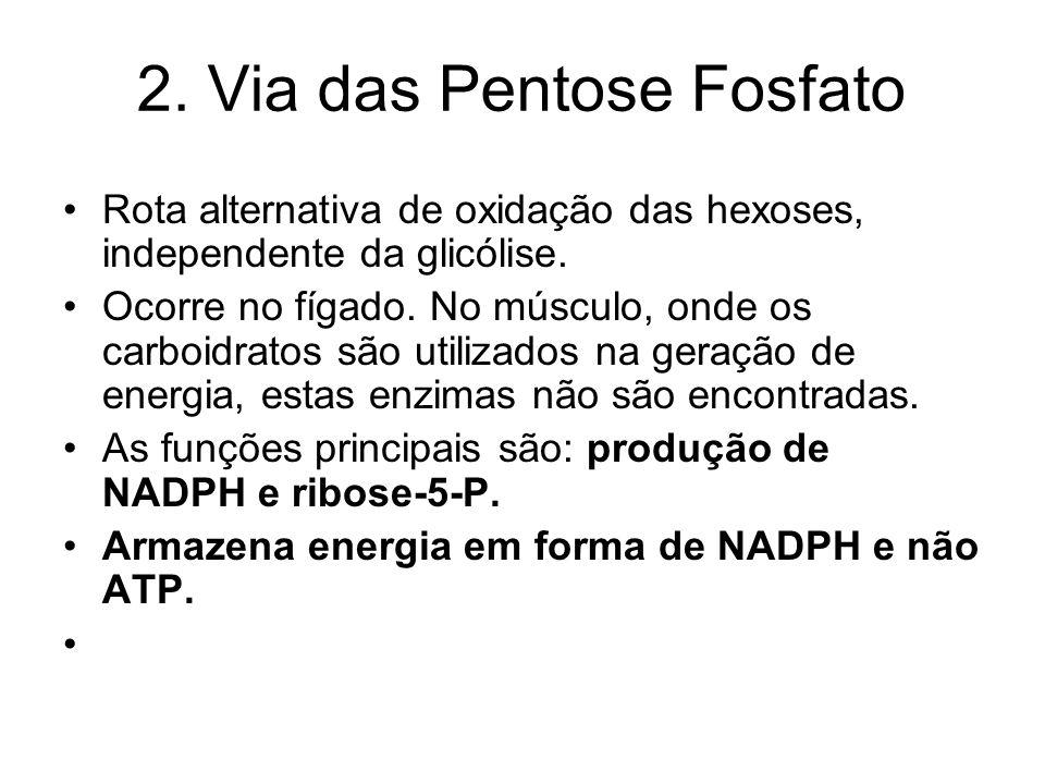 2. Via das Pentose Fosfato