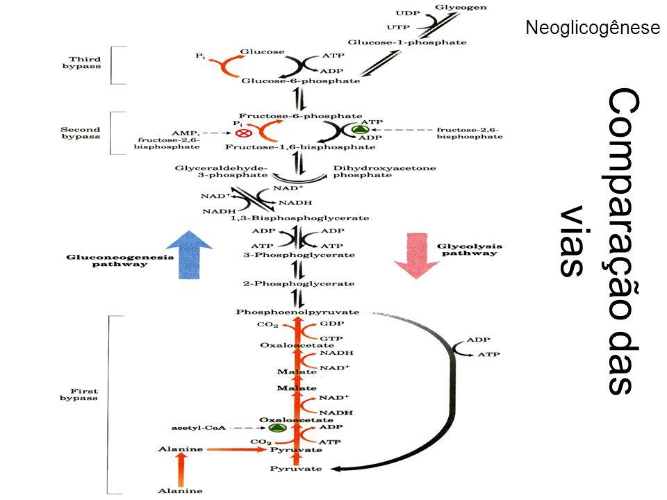 Neoglicogênese Comparação das vias