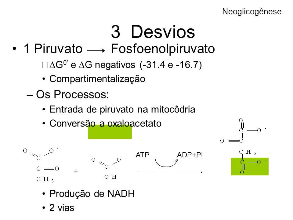 3 Desvios 1 Piruvato Fosfoenolpiruvato Os Processos: