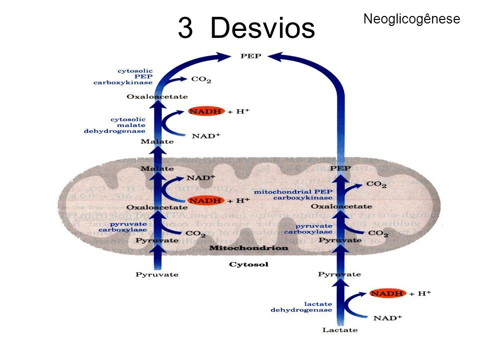 Neoglicogênese 3 Desvios