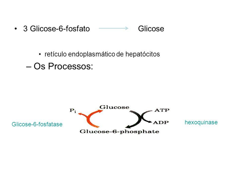 Os Processos: 3 Glicose-6-fosfato Glicose