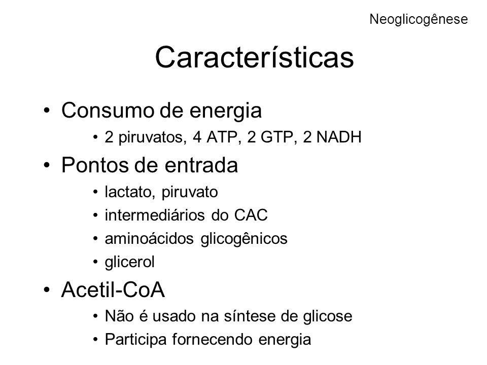 Características Consumo de energia Pontos de entrada Acetil-CoA