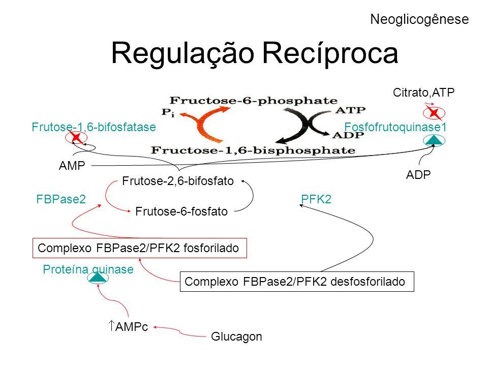Regulação Recíproca Neoglicogênese Citrato,ATP Frutose-1,6-bifosfatase
