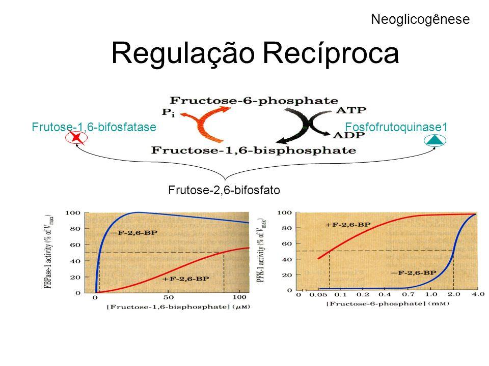 Regulação Recíproca Neoglicogênese Frutose-1,6-bifosfatase