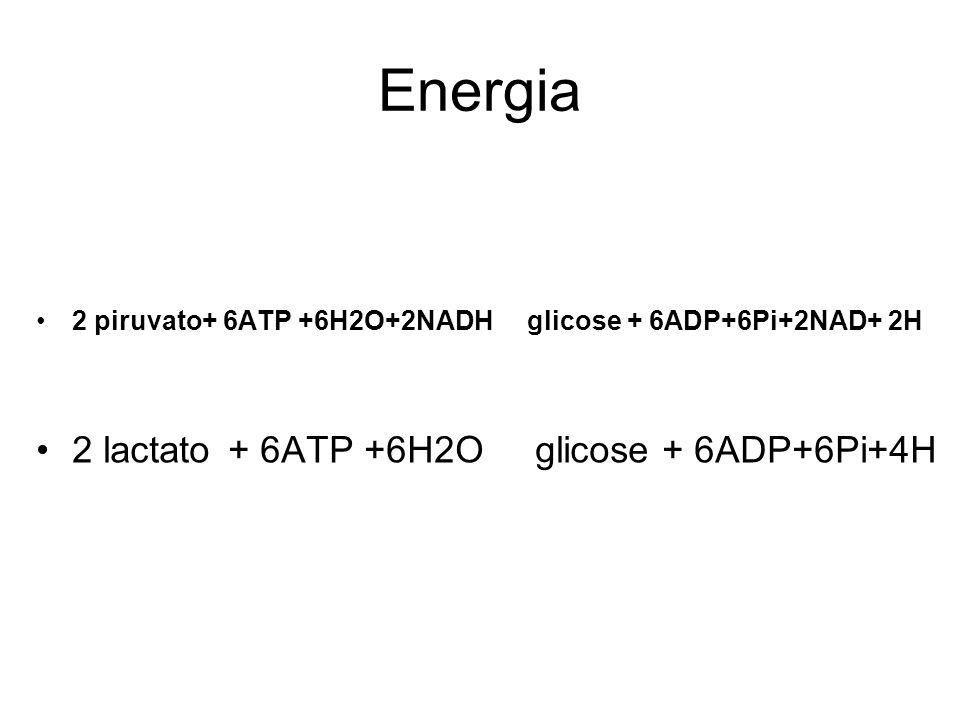 Energia 2 lactato + 6ATP +6H2O glicose + 6ADP+6Pi+4H
