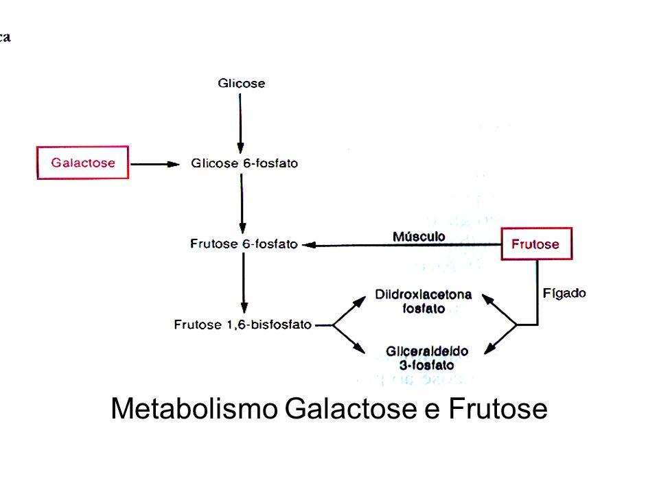 Metabolismo Galactose e Frutose