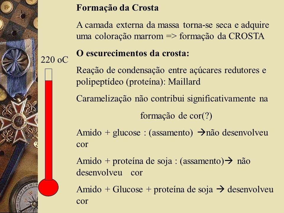 Formação da Crosta A camada externa da massa torna-se seca e adquire uma coloração marrom => formação da CROSTA.