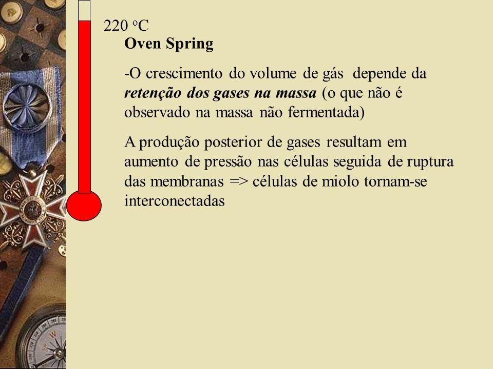 220 oC Oven Spring. -O crescimento do volume de gás depende da retenção dos gases na massa (o que não é observado na massa não fermentada)