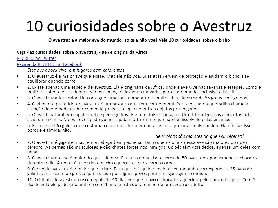10 curiosidades sobre o Avestruz