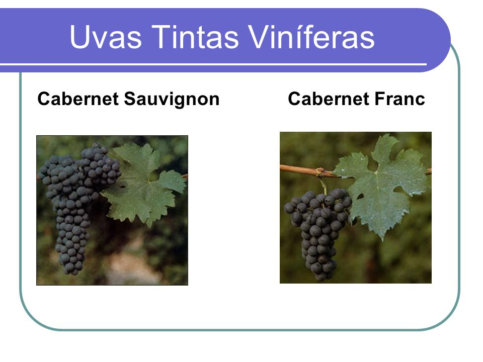 Uvas Tintas Viníferas Cabernet Sauvignon Cabernet Franc