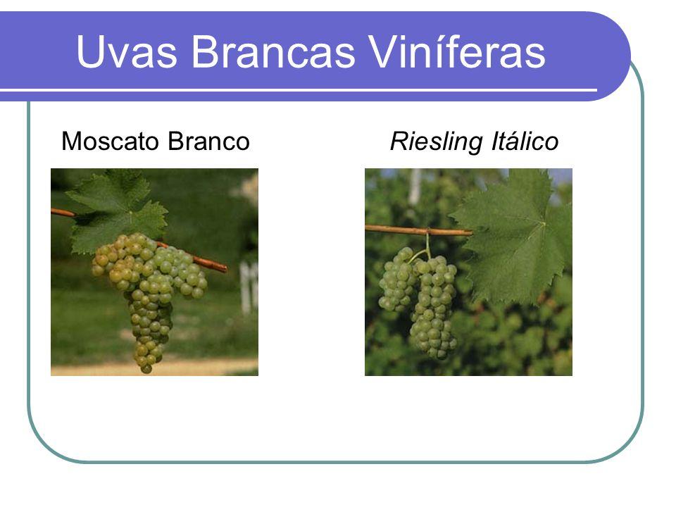 Uvas Brancas Viníferas