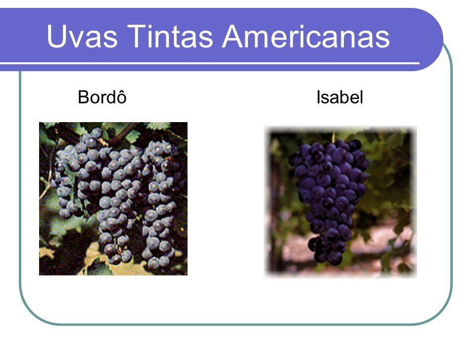 Uvas Tintas Americanas