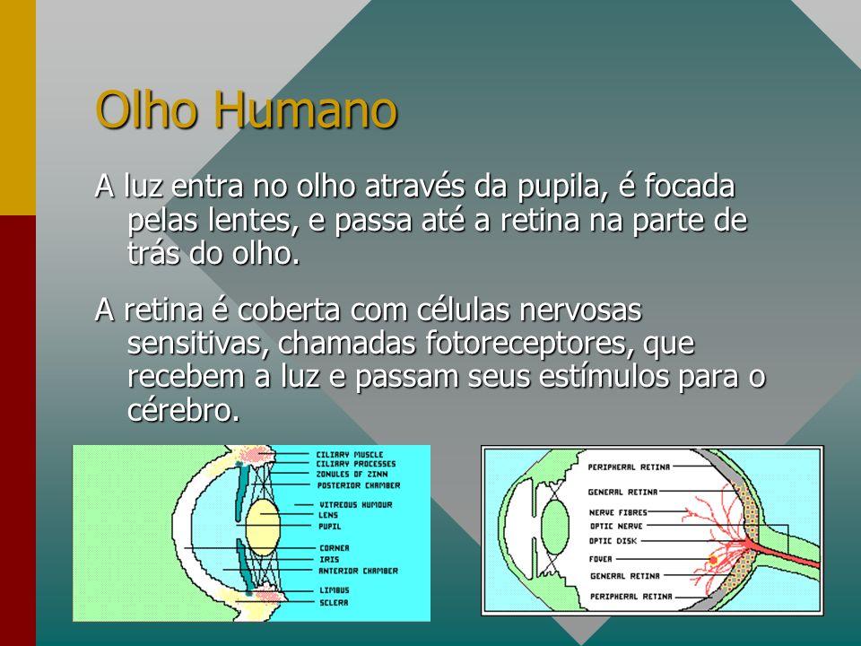 Olho Humano A luz entra no olho através da pupila, é focada pelas lentes, e passa até a retina na parte de trás do olho.