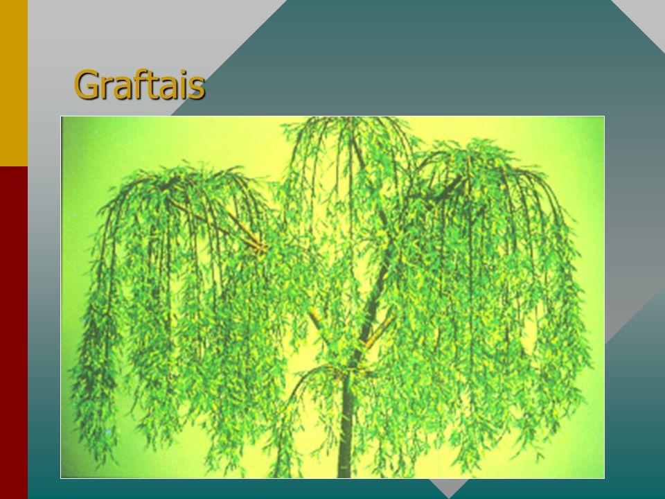 Graftais