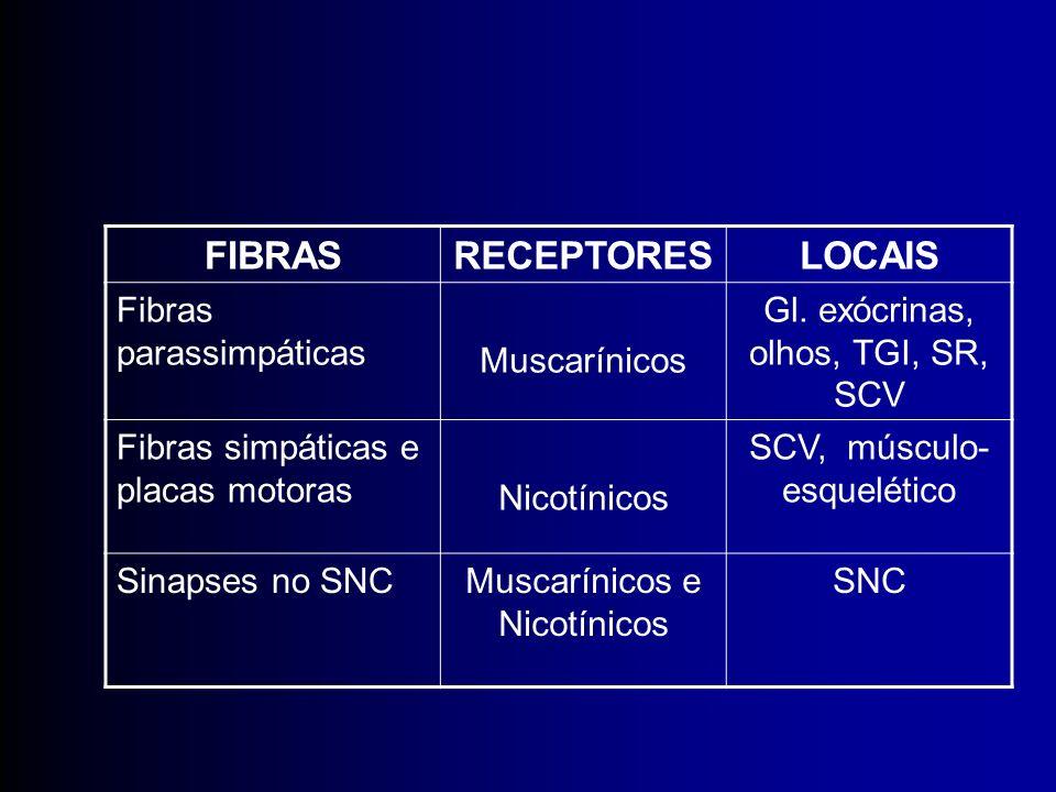 FIBRAS RECEPTORES LOCAIS