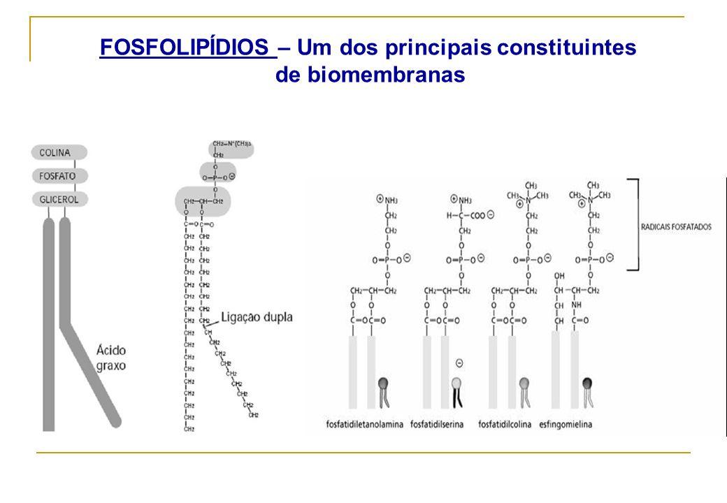 FOSFOLIPÍDIOS – Um dos principais constituintes