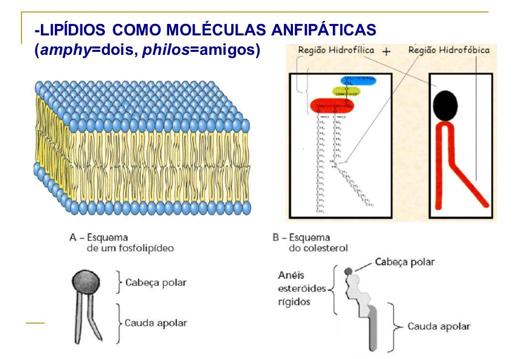 -LIPÍDIOS COMO MOLÉCULAS ANFIPÁTICAS